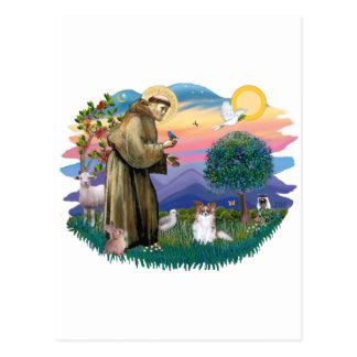 Papillon (sable-white) postcard