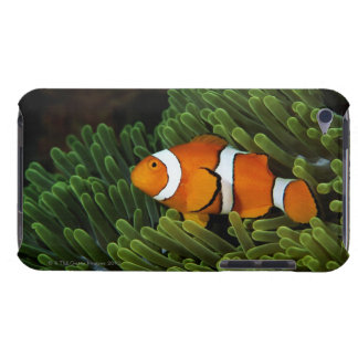 Papua New Guinea, false clown anemonefish and iPod Case-Mate Cases