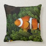 Papua New Guinea, false clown anemonefish and Throw Pillow