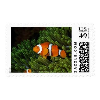 Papua New Guinea, false clown anemonefish and Postage