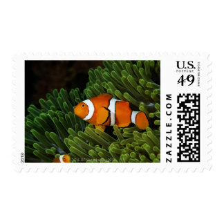Papua New Guinea, false clown anemonefish and Postage Stamps