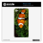 Papua New Guinea, false clown anemonefish and Decals For The iPhone 4S