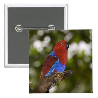 Papua New Guinea, Lae. Female Eclectus Parrot. Pinback Button