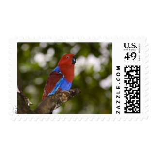 Papua New Guinea, Lae. Female Eclectus Parrot. Postage Stamp