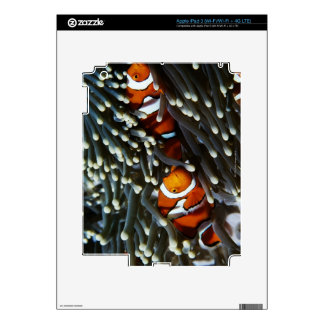 Papua New Guinea, two false clown anemonefish Decal For iPad 3