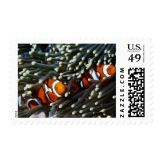 Papua New Guinea, two false clown anemonefish Postage