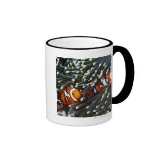 Papua New Guinea, two false clown anemonefish Ringer Mug