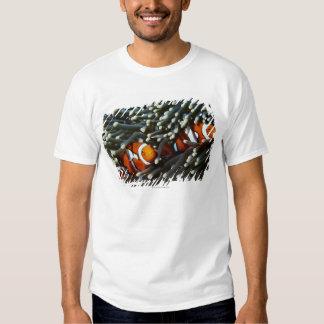 Papua New Guinea, two false clown anemonefish T Shirt