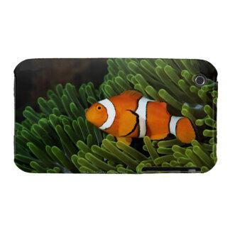 Papúa Nueva Guinea, anemonefish falso del payaso y Funda Bareyly There Para iPhone 3 De Case-Mate