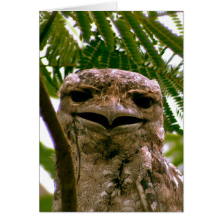 Papuan Frogmouth Card