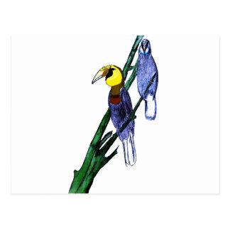 Papuan Hornbill Birds Postcard