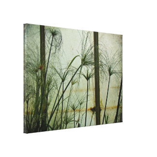 Papyrus in Green Canvas Print