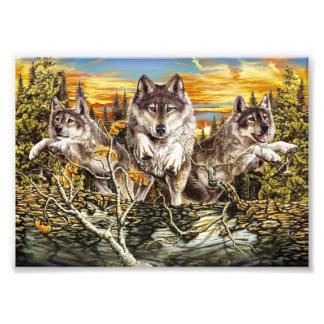 Paquete de funcionamiento de los lobos fotografía