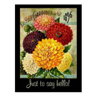 Paquete de la semilla de flor del vintage - postal