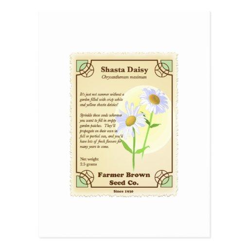 Paquete de la semilla de la margarita de Shasta Tarjeta Postal