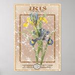 Paquete de la semilla del iris - apenado poster