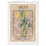 Paquete de la semilla del iris - apenado tarjeta