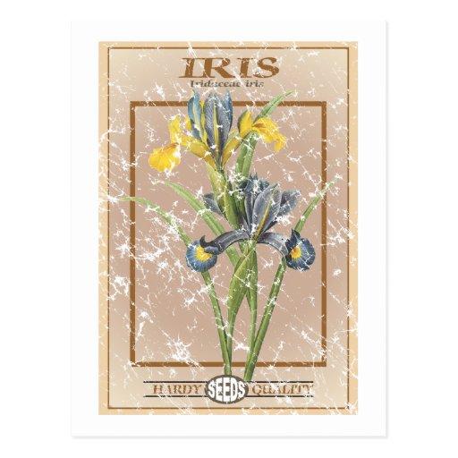 Paquete de la semilla del iris - apenado tarjeta postal