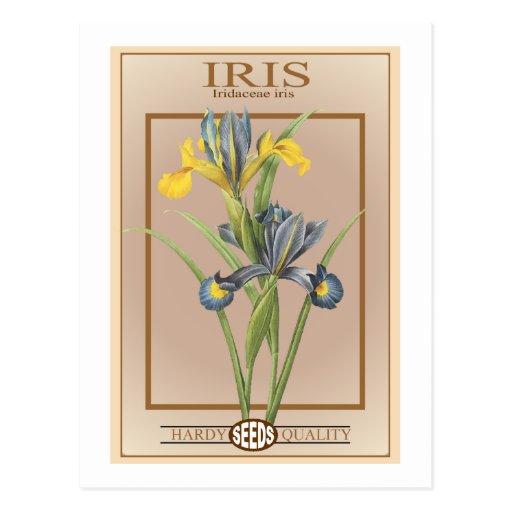 paquete de la semilla del iris postales