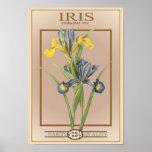 paquete de la semilla del iris posters