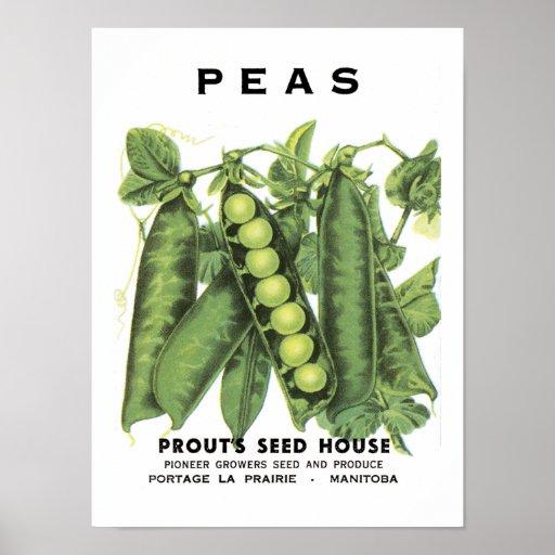 Paquete de la semilla del vintage de los guisantes poster