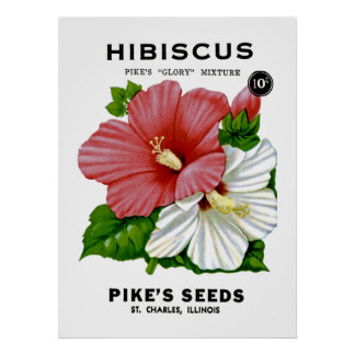 Paquete de la semilla del vintage del hibisco póster