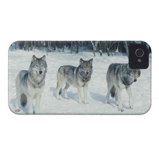 Paquete de lobos en el borde del bosque nevoso carcasa para iPhone 4 de Case-Mate