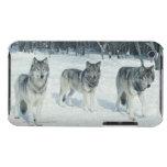 Paquete de lobos en el borde del bosque nevoso funda iPod