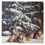 Paquete de lobos en invierno azulejo cuadrado grande