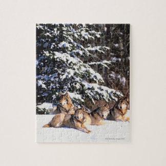 Paquete de lobos en invierno rompecabezas