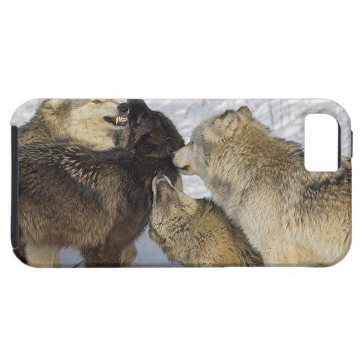 Paquete de lobos que obran recíprocamente funda para iPhone SE/5/5s
