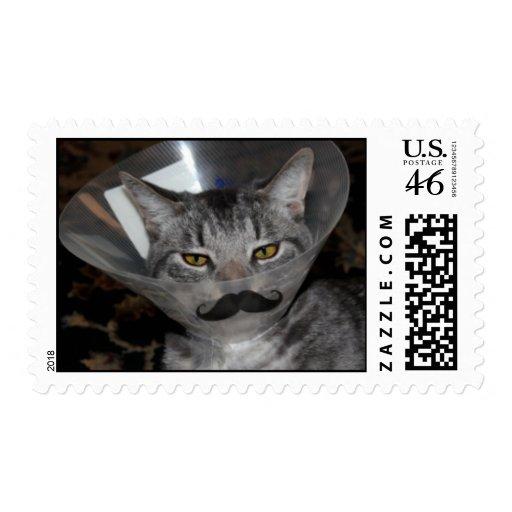 Paquete de sellos de Ferris Mewler.  Para real