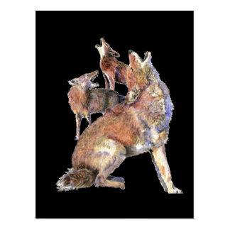 Paquete del coyote del grito, animal, fauna de la tarjetas postales