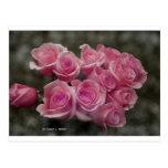 Paquete rosado de los rosas postales