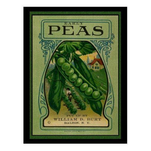 Paquete temprano de la semilla del vintage de los  tarjetas postales