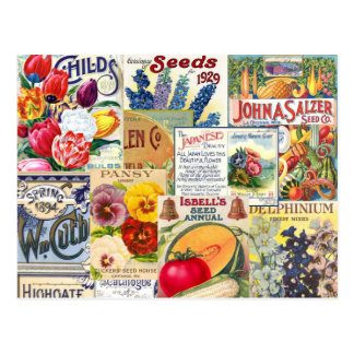 Paquetes de la semilla tarjeta postal