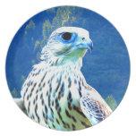 Para águila del halcón del amor que espera plato