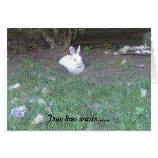 Para amor verdadero que espera tarjeta de felicitación