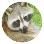 Para animal del mapache del amor que espera lindo plato de cena