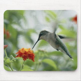 Para coger un colibrí Mousepad Alfombrillas De Raton