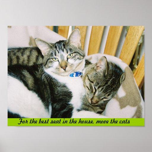 Para el mejor asiento de la casa, mueva los gatos póster