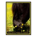 Para la boca de un qué caballo fue creada postal