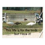 para la postal de los pájaros