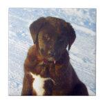 Para perrito blanco de Labrador del negro del amor Azulejo