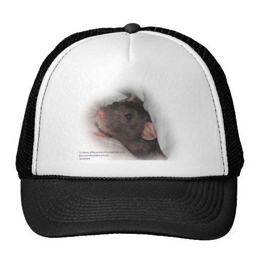 Para soñar la rata del mascota gorra