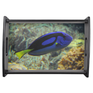 Paracanthurus hepatus serving tray