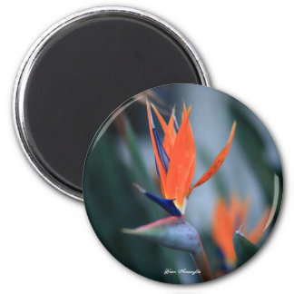 Paradise Bird Magnet