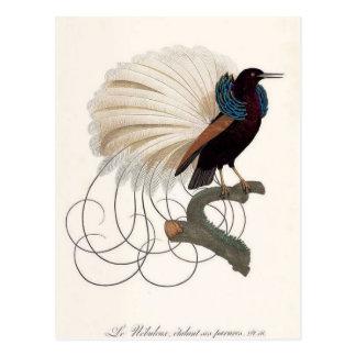 Paradise Bird Postcard