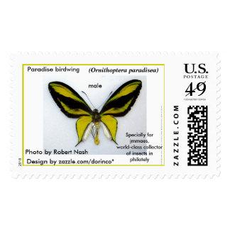 Paradise birdwing (male) - beautiful butterfly stamp