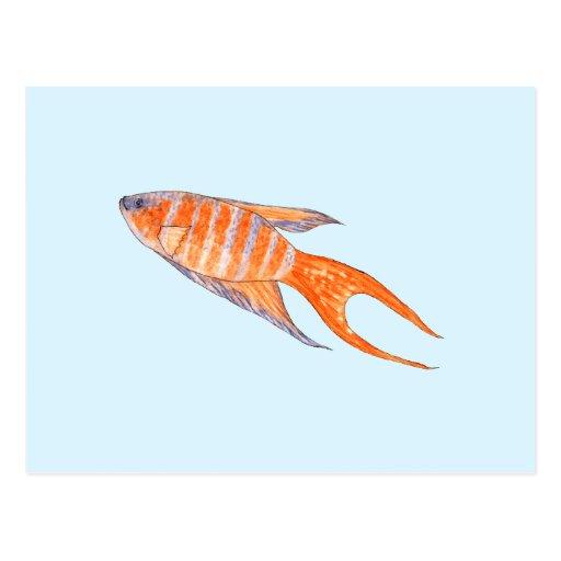 Paradise Fish, Watercolor. Postcard